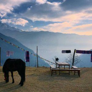 himalayangorilla_Annapurna_BAse_Camp_Trek (15)